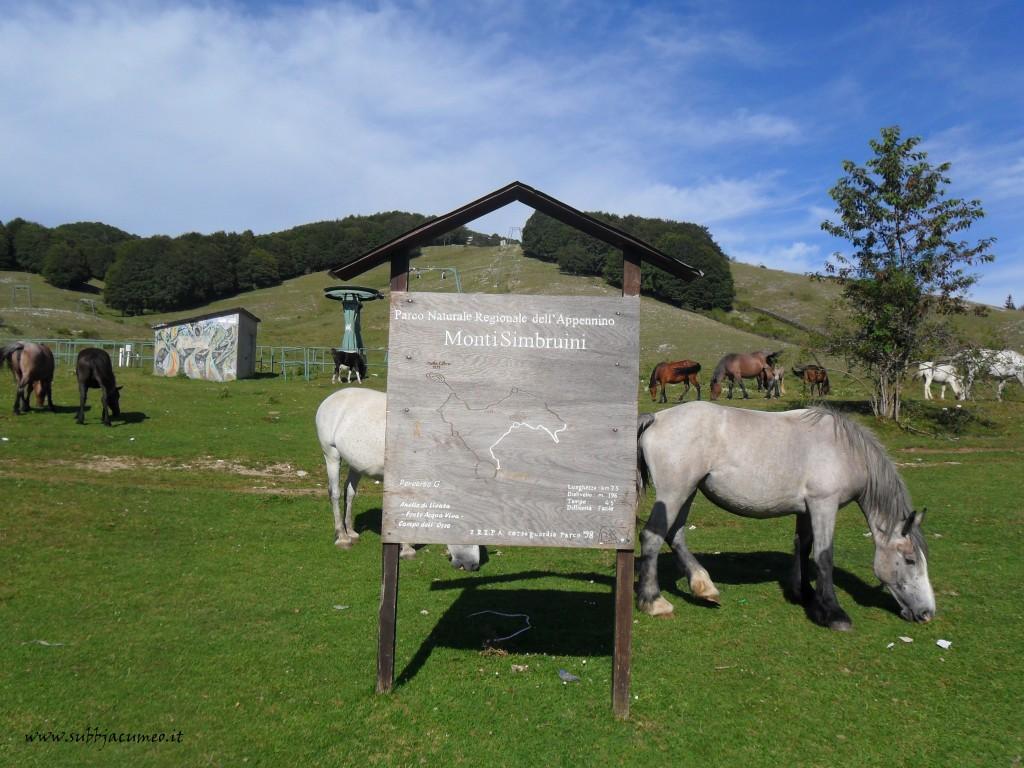 Cavalli a Monte Livata _ Parco N.